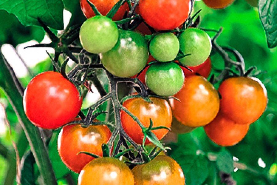 Phytosanitaire